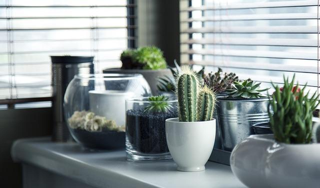 Perché le piante di seta hanno goduto di una rinascita nel paesaggio interno