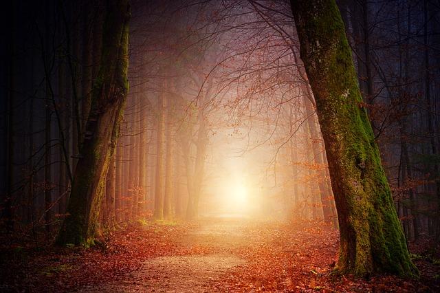 10 cose che dovresti sapere sui consulenti di illuminazion
